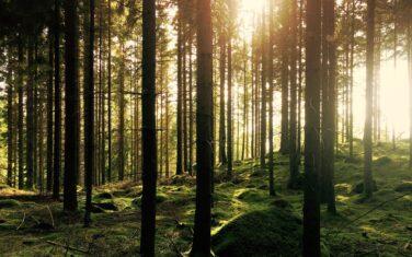 DES-20-01 - Provides - Forest - Picture by Gustav-Gullstrand