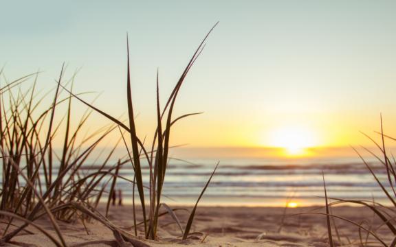 Springtij- Beach dunes