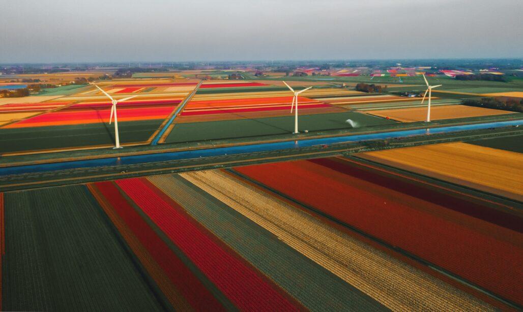 Megawatt - Flower landscape